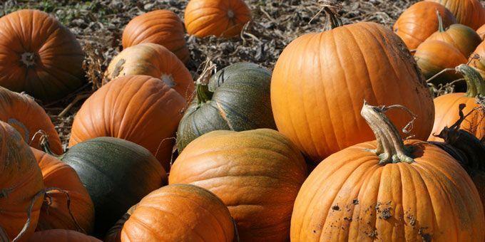 Photo 10Isbells-Pumpkin-Farm