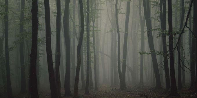 Photo 10Jasons-Woods