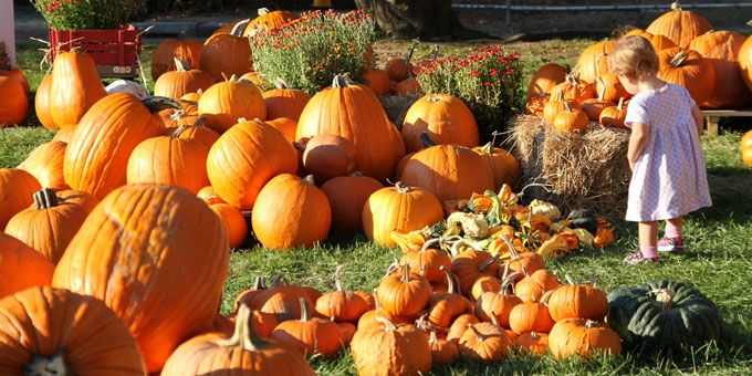 Photo 15Priebes-Pumpkin-Patch