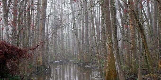Photo 17Manchac-Swamp