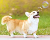 Photo 1dogWithBubbles