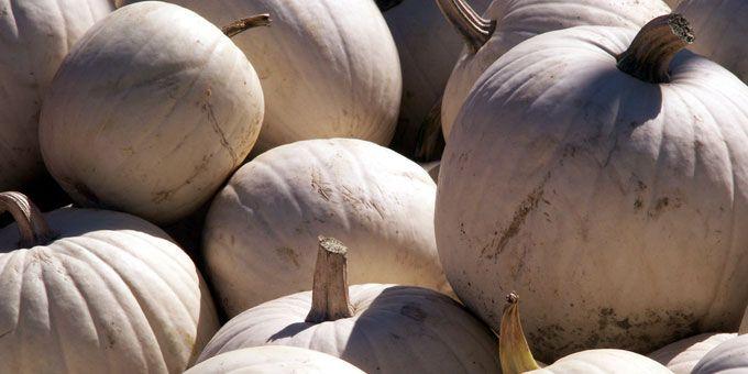 Photo 23Hogan-Farm-Market
