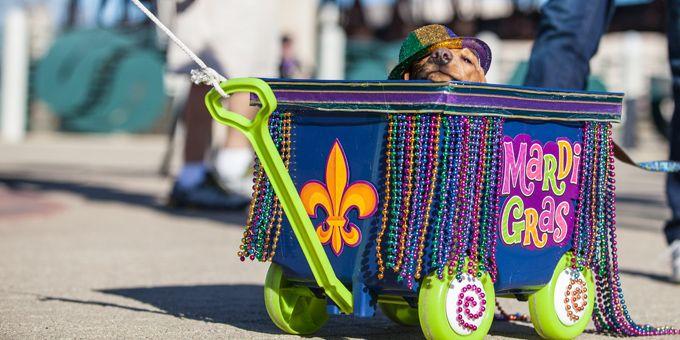 ecc1fd78fe7aa Top 10 Louisiana Mardi Gras Festivals That Aren't in New Orleans