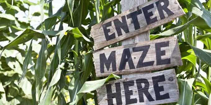 Photo 2Derthicks-Corn-Maze