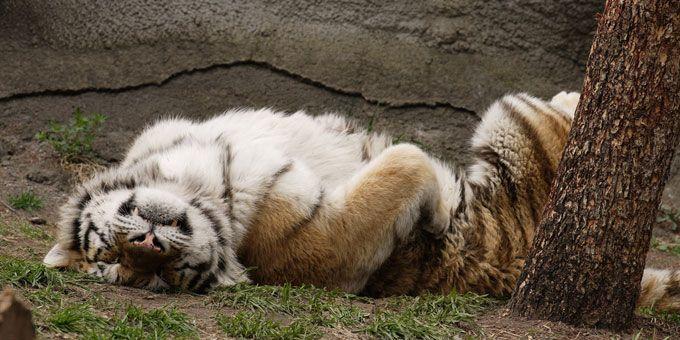 Photo 31Detroit-Zoo