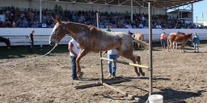 Photo 35Clark-County-Mule-Festiva