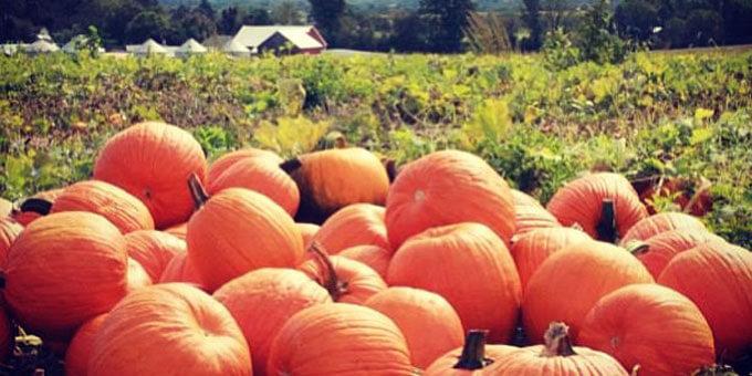 Photo 3Great-Pumpkin-Patch