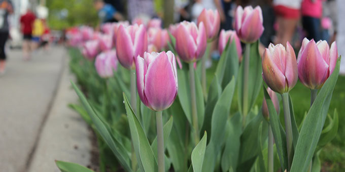 Photo 40See-the-tulips