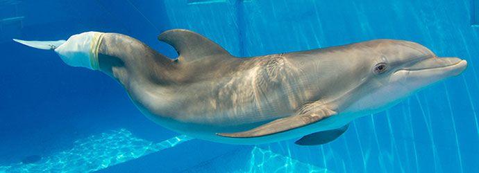 Photo Clearwater-Marine-Aquarium