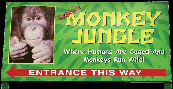 Photo Monkey-Jungle1
