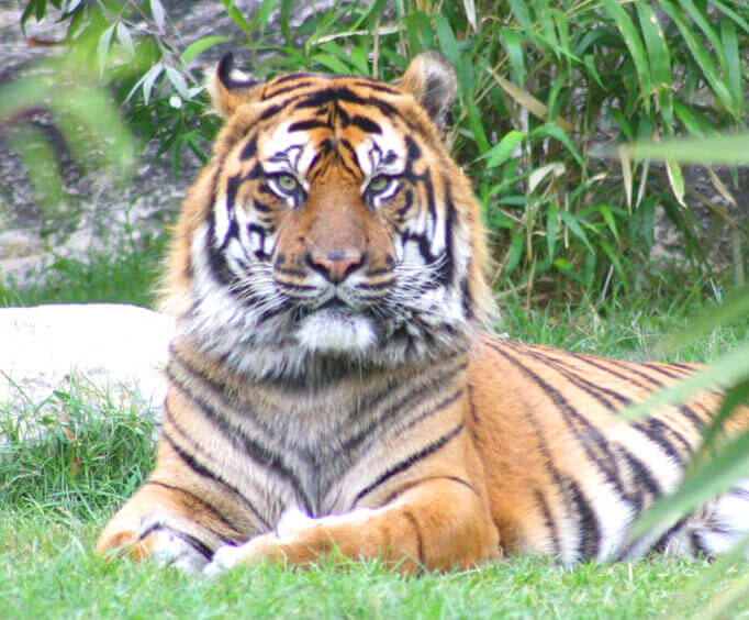 Top Spring Festivals in San Antonio