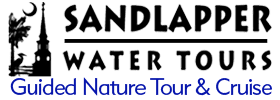 Guided Nature Tour and Cruise of Charleston Harbor