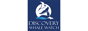 Monterey 4-Hour Whale Watching Experience