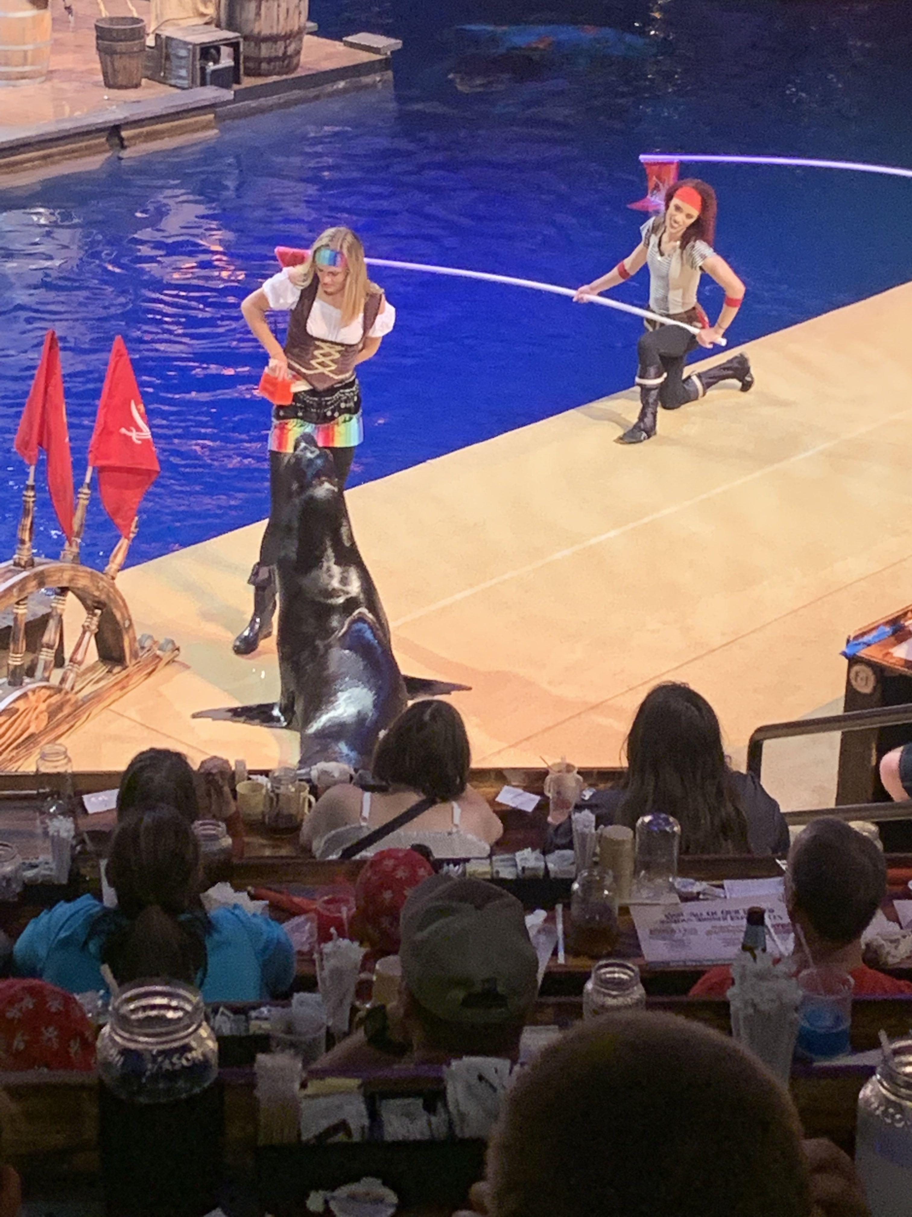 Pirates with a Seal at Pirates Voyage Dinner and Show Pigeon Forge