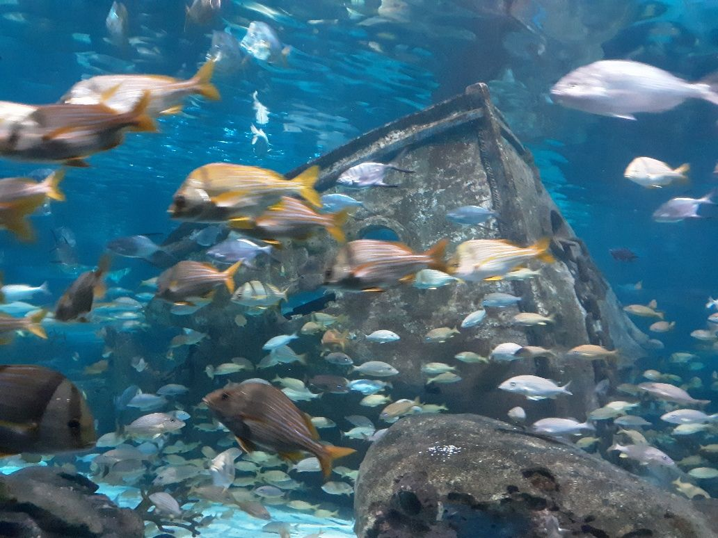 Tons of Fish at Ripleys Aquarium of the Smokies