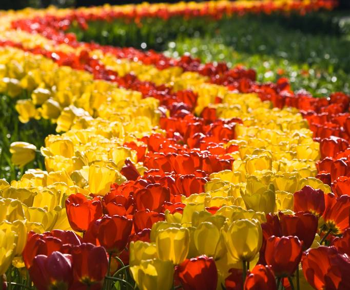 The biltmore festival of flowers in asheville north carolina mightylinksfo
