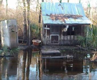 Manchac Swamp near New Orleans, LA