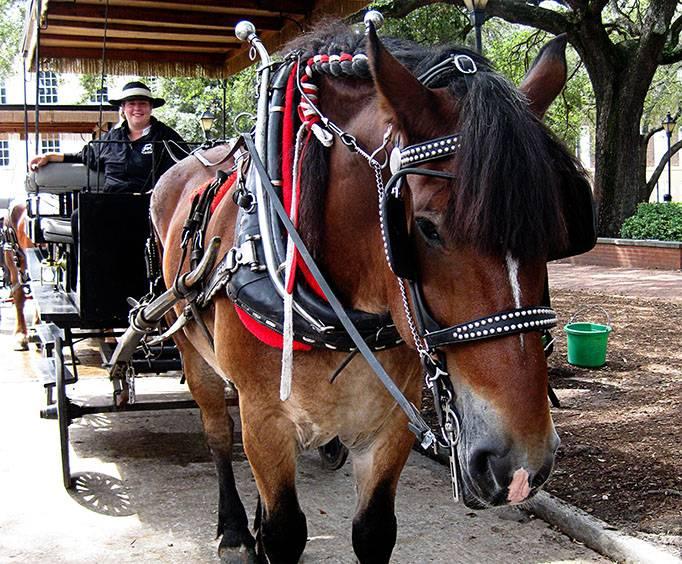Savannah Carriage Tours In Savannah Ga