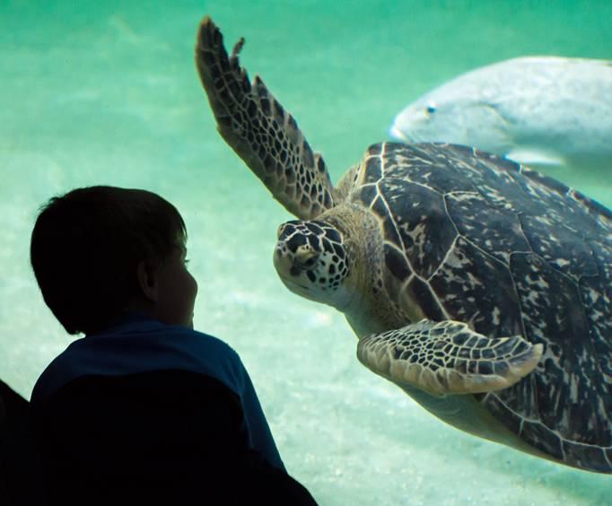 North Carolina Aquarium Near Wilmington Nc