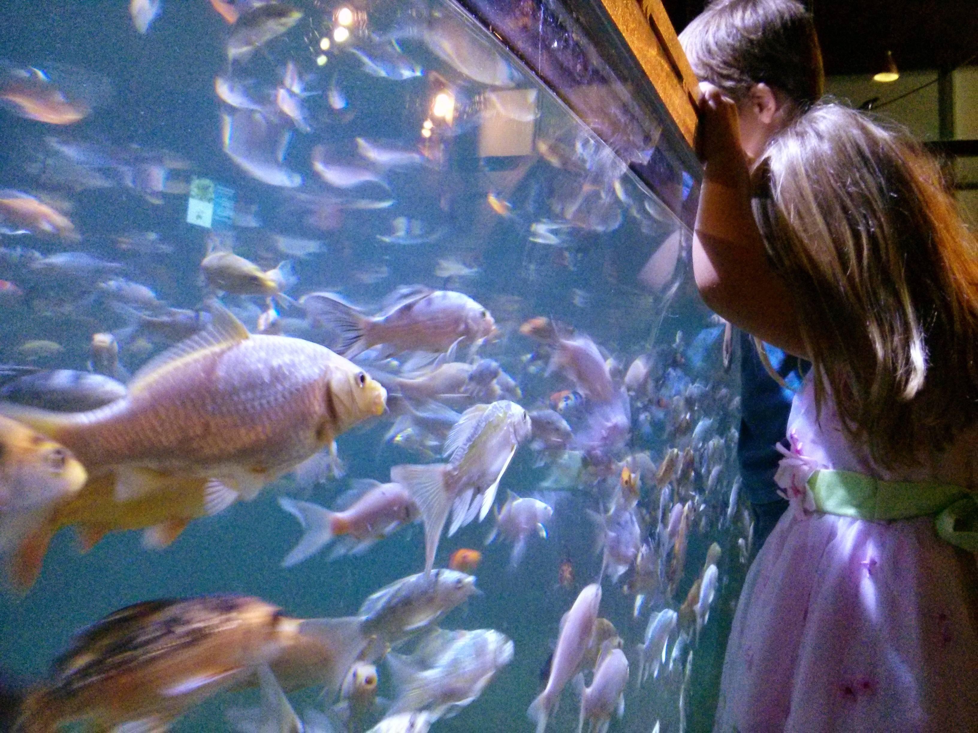Austin aquarium in austin tx for Fish store austin