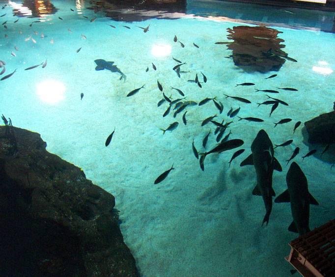 Newport Aquarium Near Cincinnati Oh