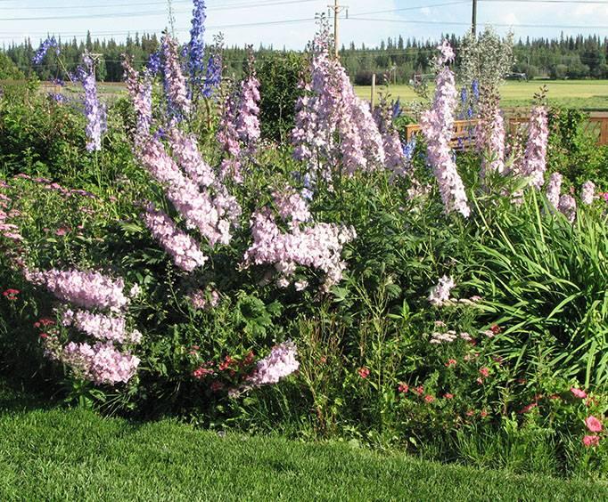 alaska botanical garden in anchorage ak - Alaska Botanical Garden