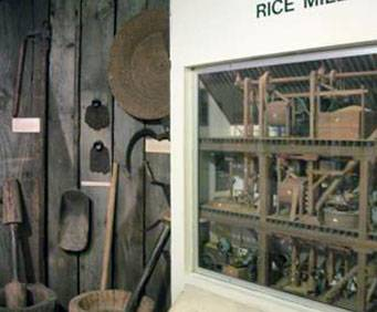 Rice exhibit