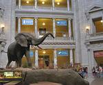 Smithsonian Institution Information Center in Washington, DC, museum