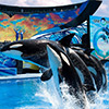 SeaWorld San Antonio Vacation Package