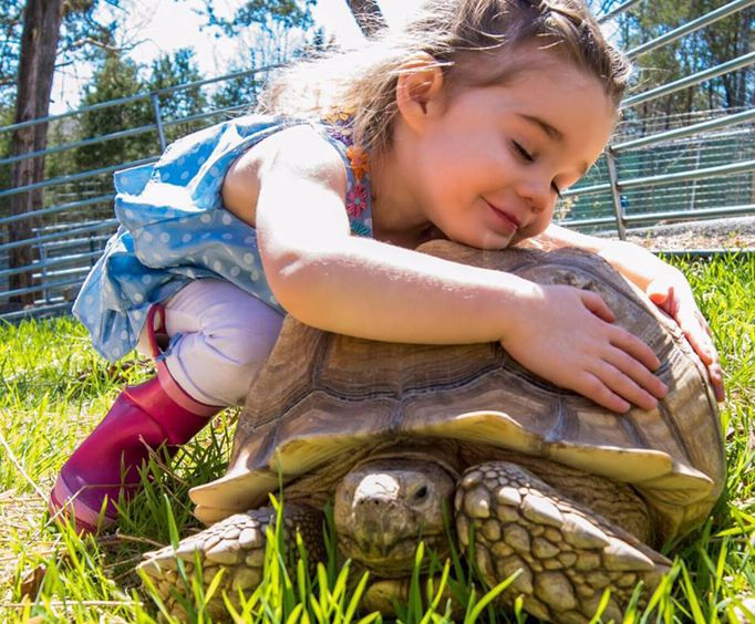 Girl and Tortise at Bransons Promised Land Zoo