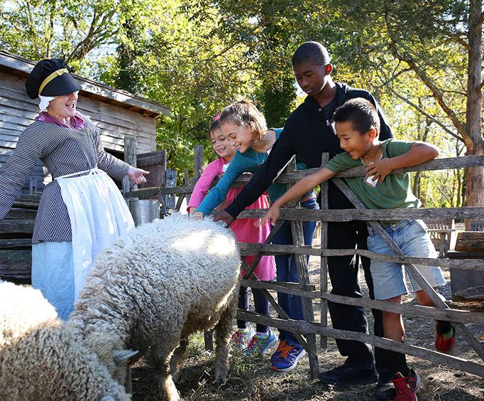 Petting Sheep at Colonial Williamsburg