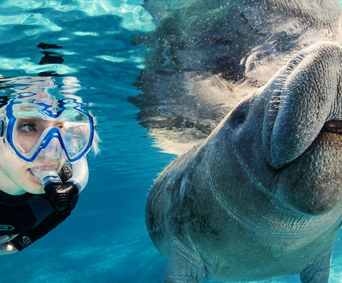Snorkel and Swim with the Manatees