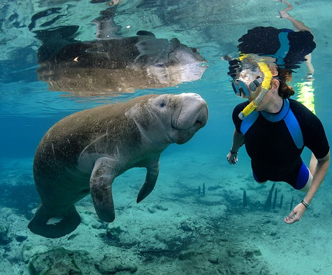 Swim with the Manatees