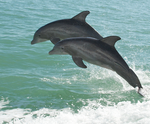 Dolphins`