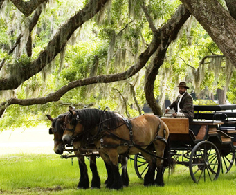 Charleston Middleton Place Plantation carriage ride