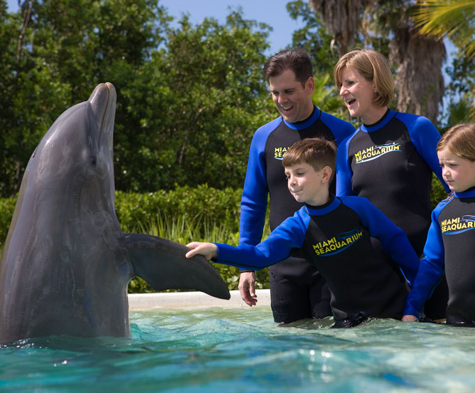 Shaking hands with a dolphin