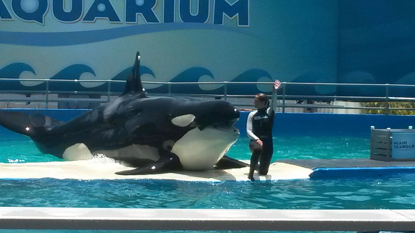 Killerwhale show
