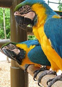 City Tour and Parrot Jungle Island