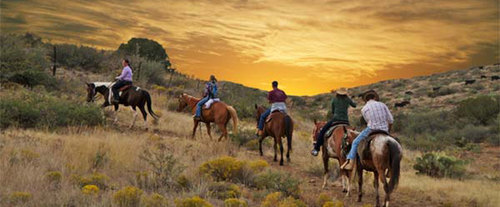 The horses are the perfect travelling companions for a journey across the desert.