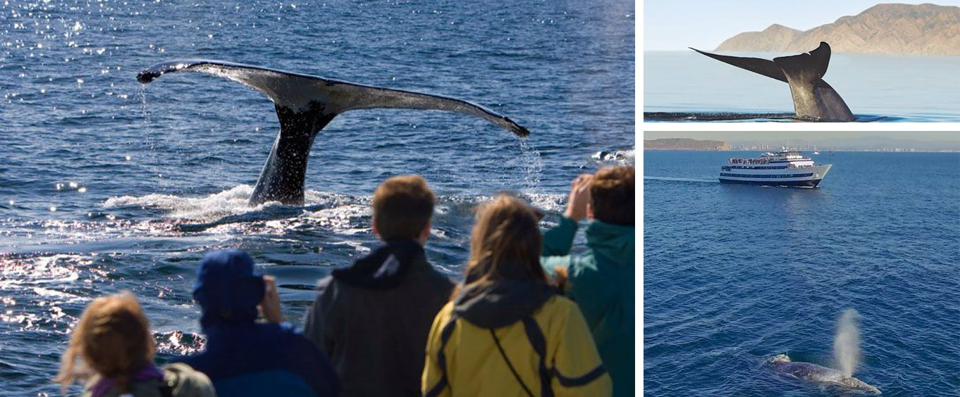 Amazement on the Hornblower Summer Whale Watching Adventure