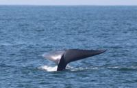 Whale Watching Tours in Oceanside, CA