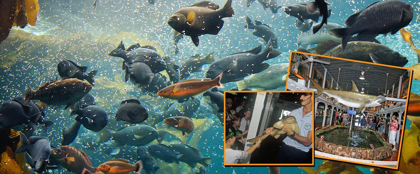 Enjoy the Key West Aquarium