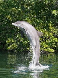 See the Dolphin Show at the Theater of the Sea!