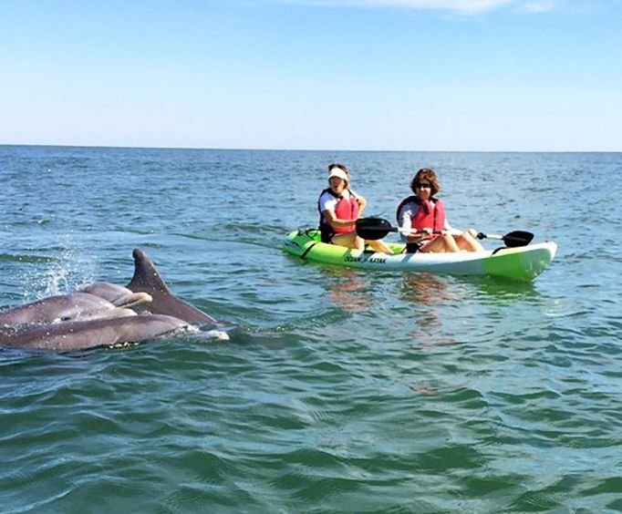 Amazing Experience with Small Group Dolphin Kayak Eco Tour