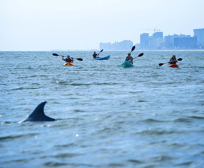 Approaching Dolphins with the Small Group Dolphin Kayak Eco Tour