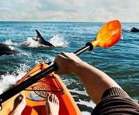 Get Close to Dolphins with a Small Group Dolphin Kayak Eco-Tour