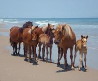 Wild Horse Tour from Virginia Beach