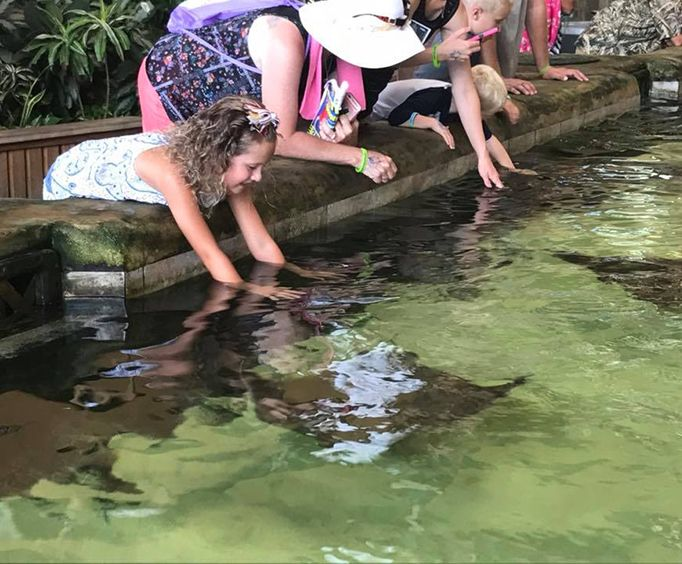 Petting Sting Rays at Gulf World Marine Park