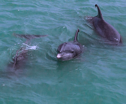 Dolphin Watch and Sea Life Cruise in South Padre Island, Texas