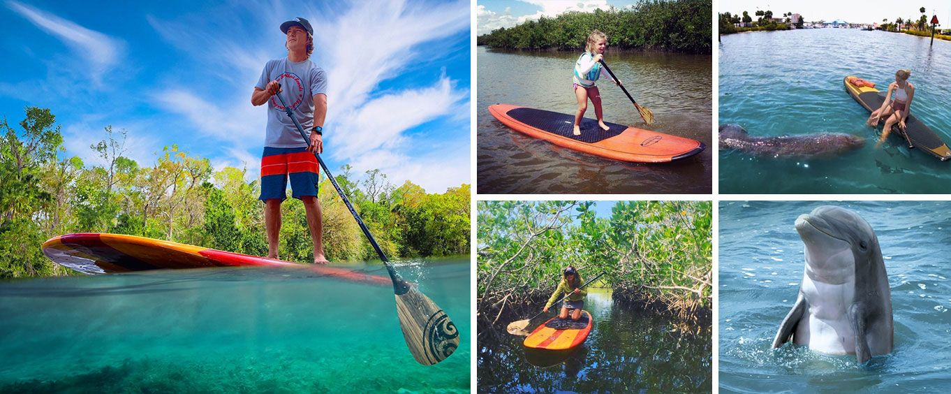 Dolphin and Manatee Stand Up Paddleboard Tour Collage